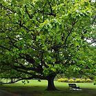 Park Tree by lezvee