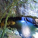 Natural Arch, Numinbah forest , Springbrook ,Queensland  by Virginia McGowan