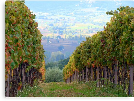 Through the Vines by Kathryn Simon