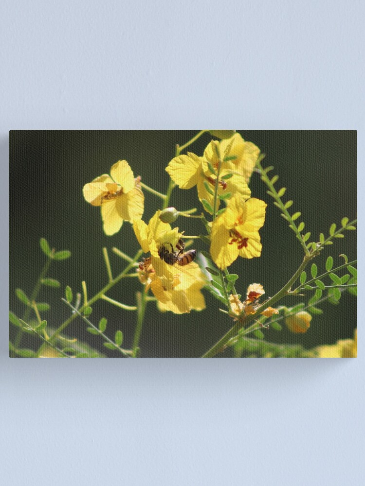 Alternate view of Macro of Bee Pollinating a Palo Brea Blossom Canvas Print