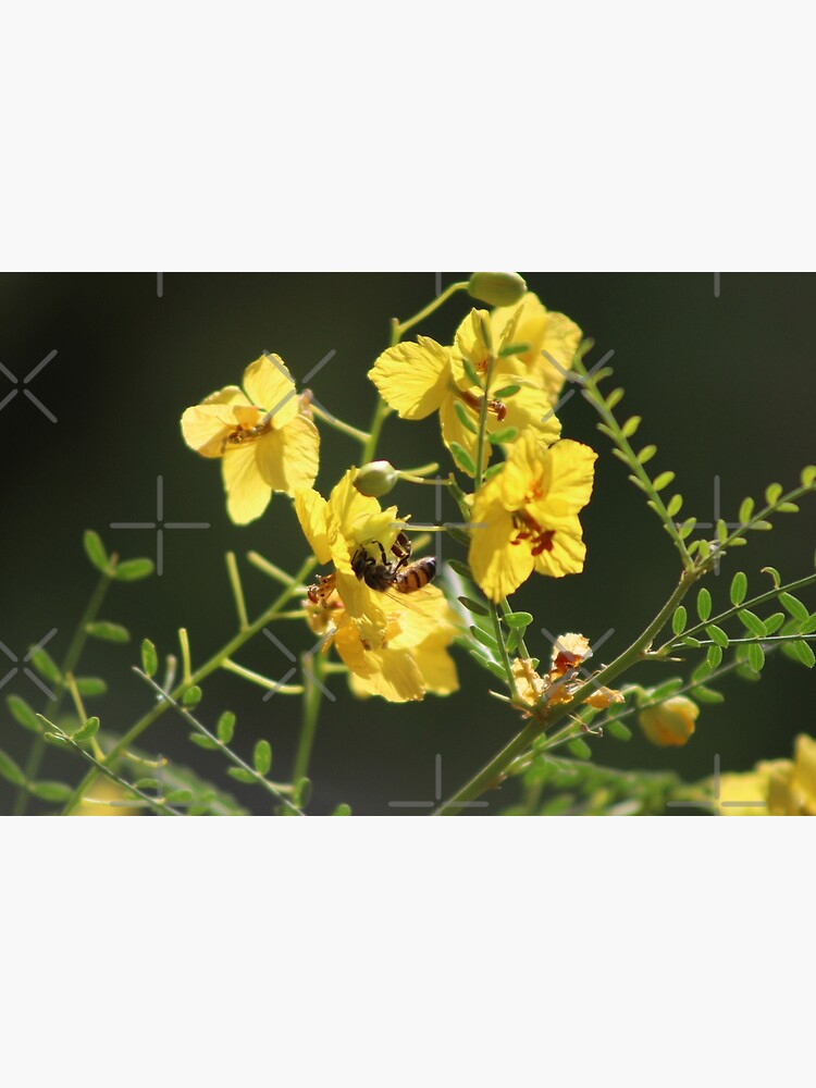 Macro of Bee Pollinating a Palo Brea Blossom by ButterflysAttic