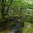 Rocks, Moss And The River Fowey (Cornwall) by lezvee