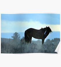 Steens stallion in Snow Poster