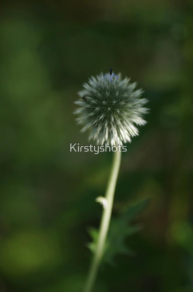 Budding .... by Kirstyshots