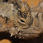 Thorny Devil by Catherine Whitehead