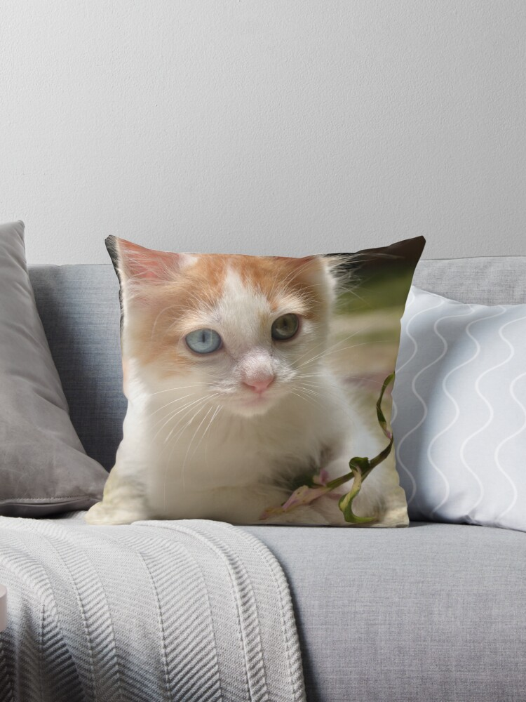 Gifts for cat lovers - Kittens - Cat-themed gifts. by net1media