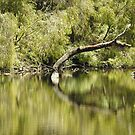 Serenity on the Warren River by adbetron