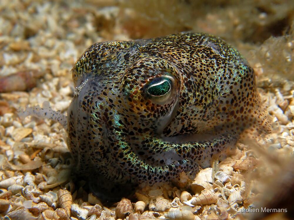 Southern Dumpling Squid by Carolien Mermans