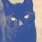 Love you Cat by Hayleyschreiber