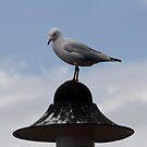 Getting a birdseye view by chloemay