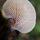 Fan Fungus by Leoni Mullett