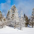 Yellowstone Winter Morning by robcaddy