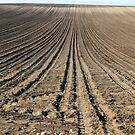 brown plowed field landscape by goceris