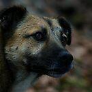 Hund - Strassenhund von laura-S