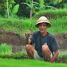 """""""Look, these are young rice plants....."""" by Adri  Padmos"""