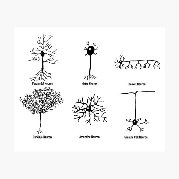 Types Of Neurons Photographic Print