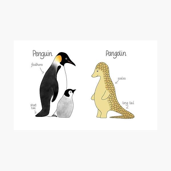 Penguin or pangolin? Photographic Print