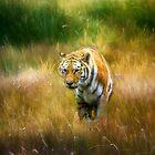 Stalking Tiger by Kathy Weaver