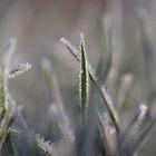 Grass Marguerita by cuprum