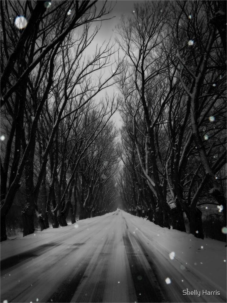 Winter Tree Tunnel by Shelly Harris