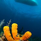 three sponge fingers and a boat by muzy