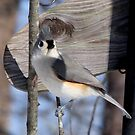 Winter Titmouse 2 by Lolabud