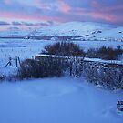 boreal sunrise by NordicBlackbird