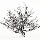 Tree in winter by patrick pichard