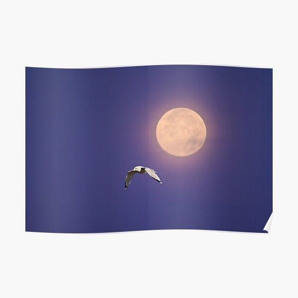 Moonlight Flight Poster