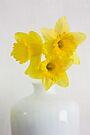 A vase of golden daffodils by inkedsandra