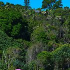 One pink umbrella at the back of the beach contrasts against the green of nature reserve  by andremichel