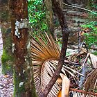 Tree Ferns (Cyatheales), temperate rainforest by andremichel