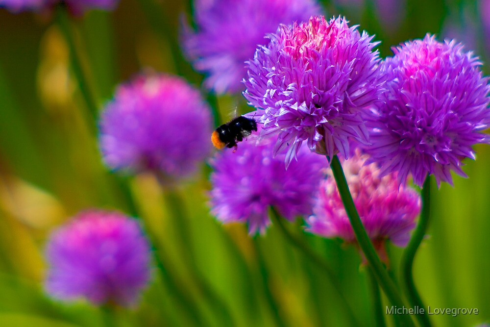 Bee & Chive by Michelle Lovegrove