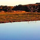 Tallow Sunset Tones by byronbackyard