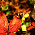 Little Lady of Autumn by shutterbug2010