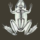 Frog Skeleton: Animal Anatomy by Ossuarium Floreus