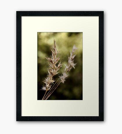 The beauty still LIVES  Framed Print