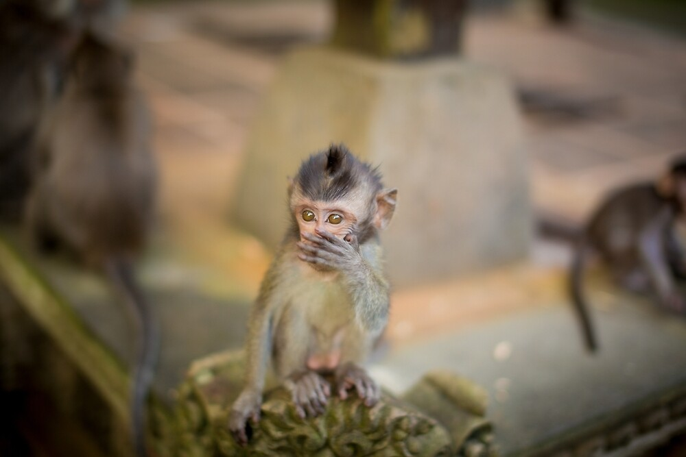 Baby Monkey by andrewsparrow
