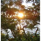 Little Manly at Sunset - through the trees by kelliejane