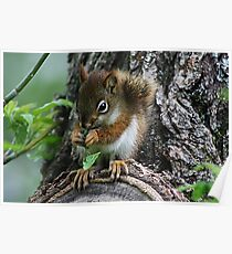 The Most Adorable Baby Squirrel Poster