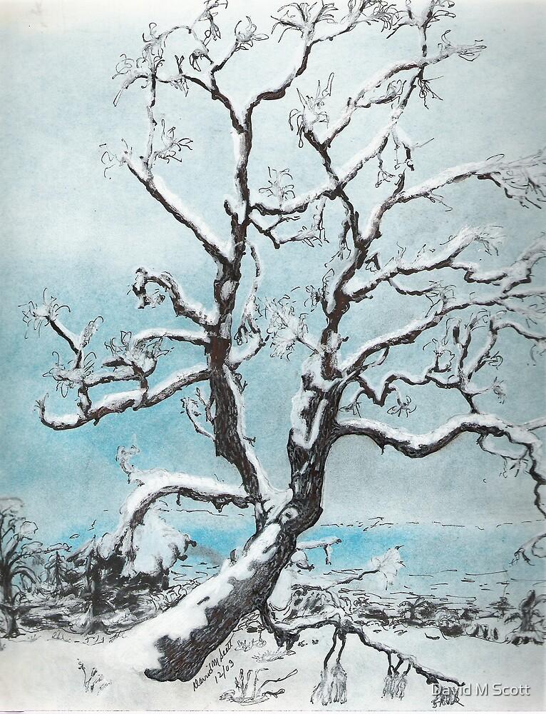 Fresh Fallen  snow on Mountain Oak by David M Scott
