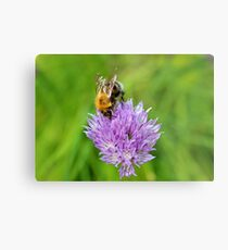 Bee & Chives Metal Print