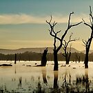 Dead Wood in the Morning Mist,Lake Fyans, Grampians by Joe Mortelliti
