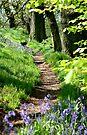 Spring path by John Keates