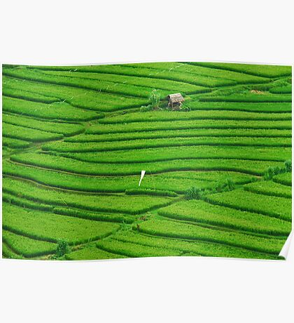 Lines in the rice field Poster