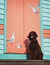 Irish Water Spaniel - Bird Dog by Helen Green