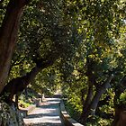 Path in the woods by Barbonetor