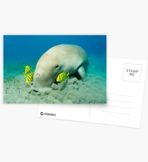 Vacuum Cleaner Postcards