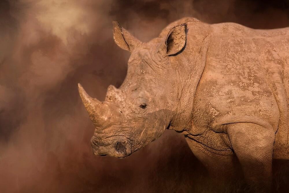 White Rhino! by Lyn Darlington