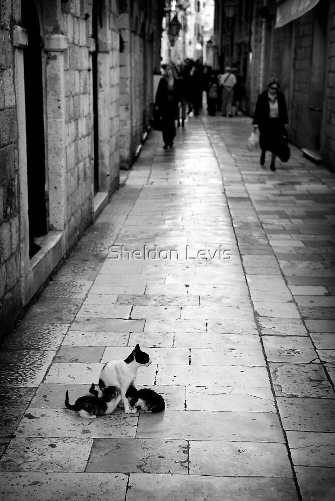 Cat and her kittens on Dubrovnik street. Dubrovnik, Croatia by Sheldon Levis
